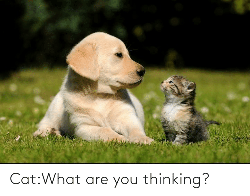 What Are You Thinking: Cat:What are you thinking?