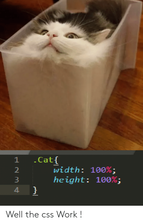 css: .Cat{  width: 100% ;  height: 100%;  }  1 Well the css Work !