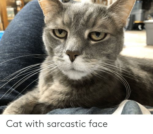 Cat, Face, and Sarcastic: Cat with sarcastic face