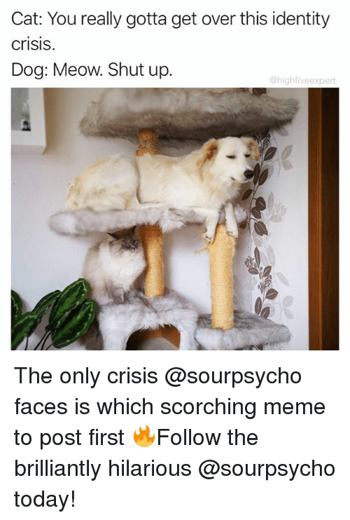 Meme, Memes, and Shut Up: Cat: You really gotta get over this identity  CriSIS.  Dog: Meow. Shut up  @high fiveexpert The only crisis @sourpsycho faces is which scorching meme to post first 🔥Follow the brilliantly hilarious @sourpsycho today!