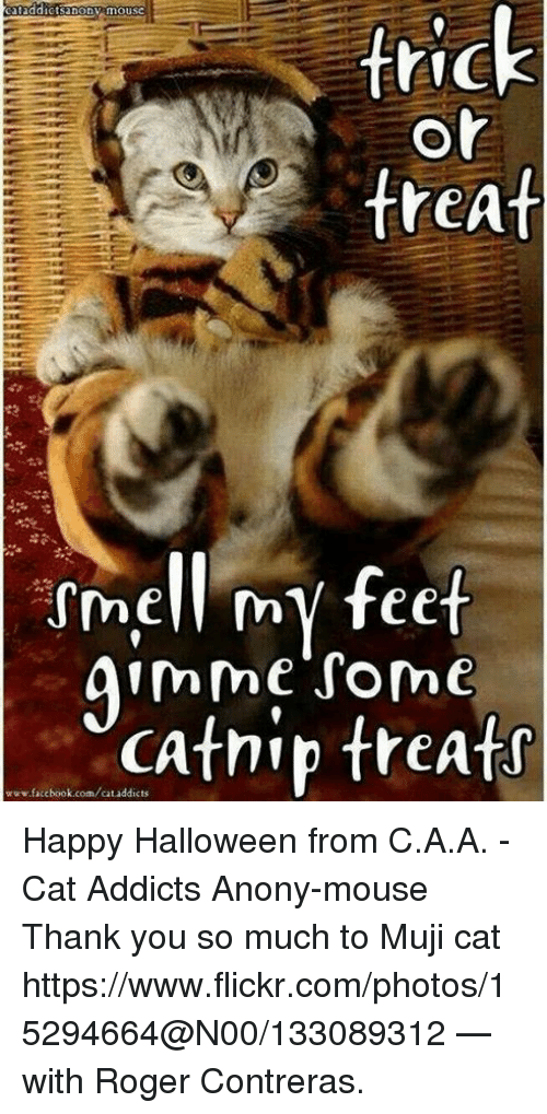 Mujis: cataddictsanony mousc  trick  or  treat  ssmell my feet  gimme some  www.facebook.com/cat addicts  treats Happy Halloween from C.A.A. - Cat Addicts Anony-mouse  Thank you so much to Muji cat https://www.flickr.com/photos/15294664@N00/133089312 — with Roger Contreras.