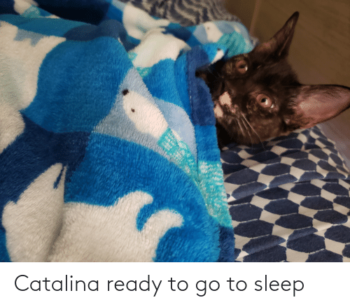 catalina: Catalina ready to go to sleep