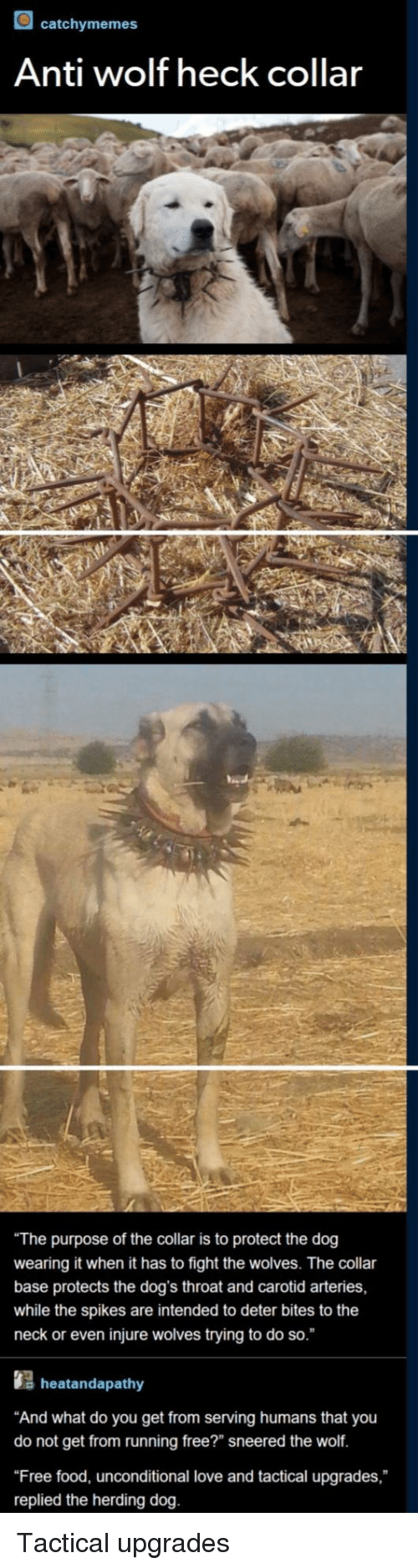 """herding: catchymemes  Anti wolf heck collar  The purpose of the collar is to protect the dog  wearing it when it has to fight the wolves. The collar  base protects the dog's throat and carotid arteries,  while the spikes are intended to deter bites to the  neck or even injure wolves trying to do so.  s heatandapathy  And what do you get from serving humans that you  do not get from running free?"""" sneered the wolf.  Free food, unconditional love and tactical upgrades,  replied the herding dog. Tactical upgrades"""