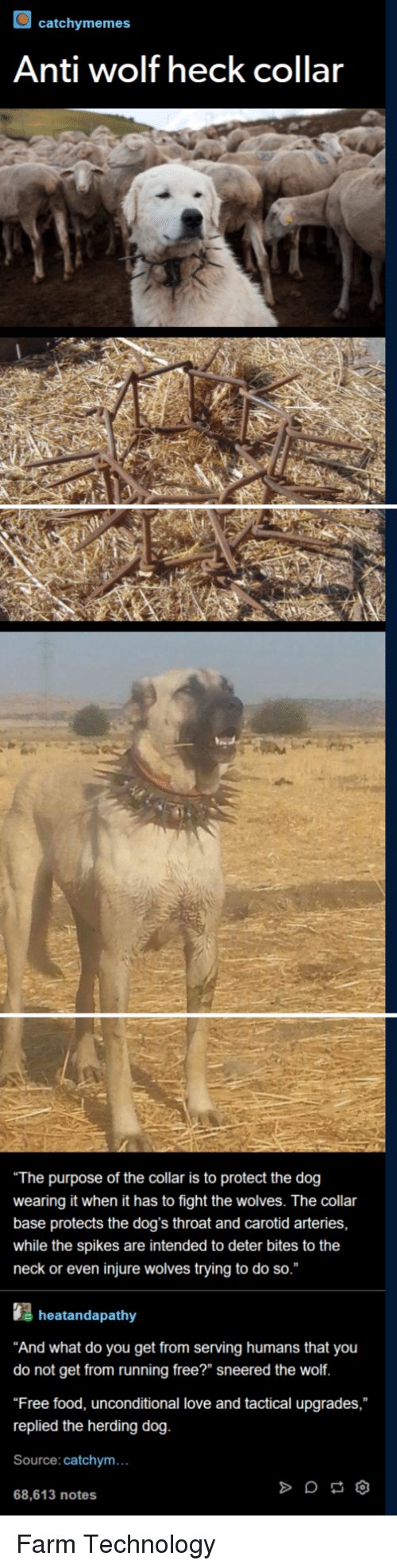 """herding: catchymemes  Anti wolf heck collar  The purpose of the collar is to protect the dog  wearing it when it has to fight the wolves. The collar  base protects the dog's throat and carotid arteries,  while the spikes are intended to deter bites to the  neck or even injure wolves trying to do so.""""  heatandapathy  And what do you get from serving humans that you  do not get from running free?"""" sneered the wolf  Free food, unconditional love and tactical upgrades,  replied the herding dog  Source: catchym...  68,613 notes Farm Technology"""