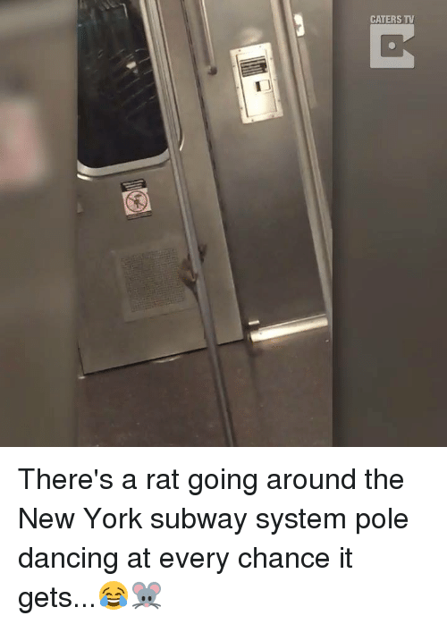 Dancing, Dank, and New York: CATERS TV There's a rat going around the New York subway system pole dancing at every chance it gets...😂🐭