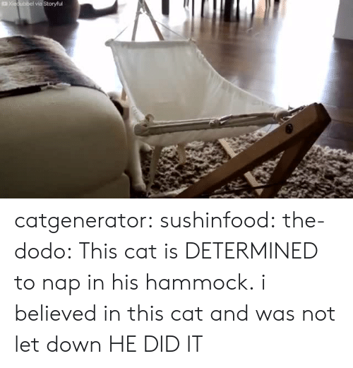 Hammock: catgenerator:  sushinfood:  the-dodo:  This cat is DETERMINED to nap in his hammock.  i believed in this cat and was not let down  HE DID IT