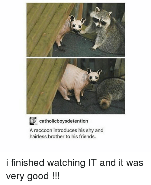 Friends, Ironic, and Good: catholicboysdetention  A raccoon introduces his shy and  hairless brother to his friends. i finished watching IT and it was very good !!!