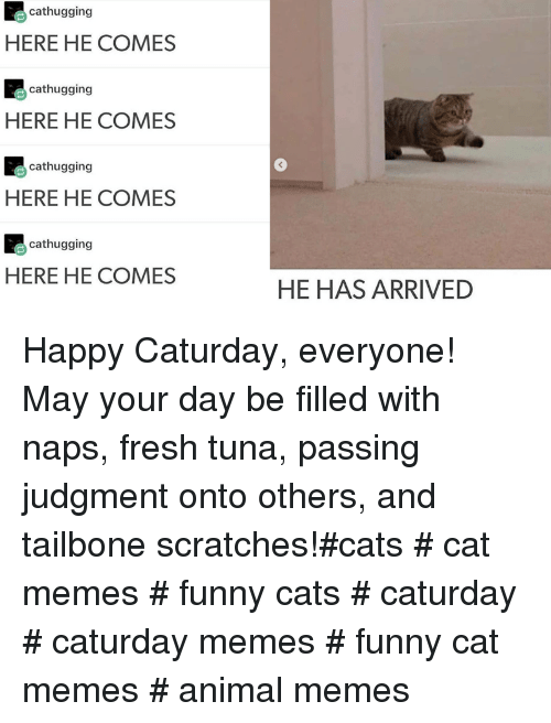 tuna: cathugging  HERE HE COMES  cathugging  HERE HE COMES  cathugging  3  HERE HE COMES  cathugging  HERE HE COMES  HE HAS ARRIVED Happy Caturday, everyone! May your day be filled with naps, fresh tuna, passing judgment onto others, and tailbone scratches!#cats # cat memes # funny cats # caturday # caturday memes # funny cat memes # animal memes
