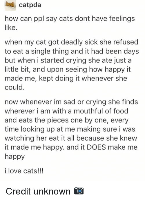 Cats, Crying, and Food: catpda  how can ppl say cats dont have feelings  like.  when my cat got deadly sick she refused  to eat a single thing and it had been days  but when i started crying she ate just a  little bit, and upon seeing how happy it  made me, kept doing it whenever she  could.  now whenever im sad or crying she finds  wherever i am with a mouthful of food  and eats the pieces one by one, every  time looking up at me making sure i was  watching her eat it all because she knevw  it made me happy. and it DOES make me  happy  i love cats!!! Credit unknown 📷