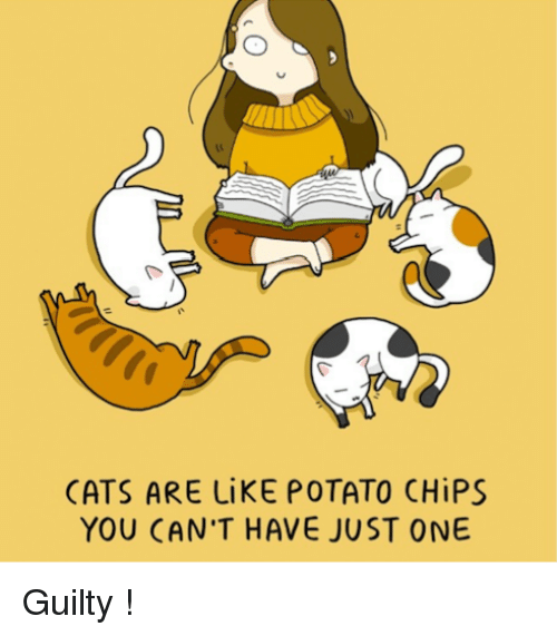Can Cats Have Potato Chips