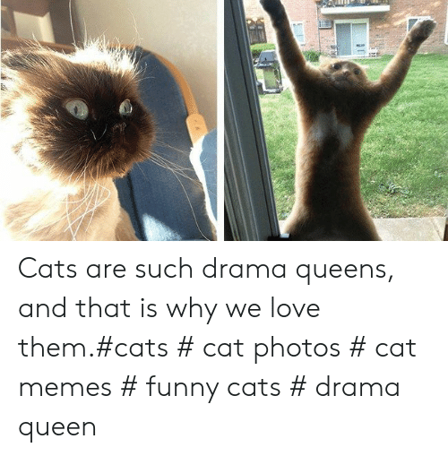 funny cats: Cats are such drama queens, and that is why we love them.#cats # cat photos # cat memes # funny cats # drama queen