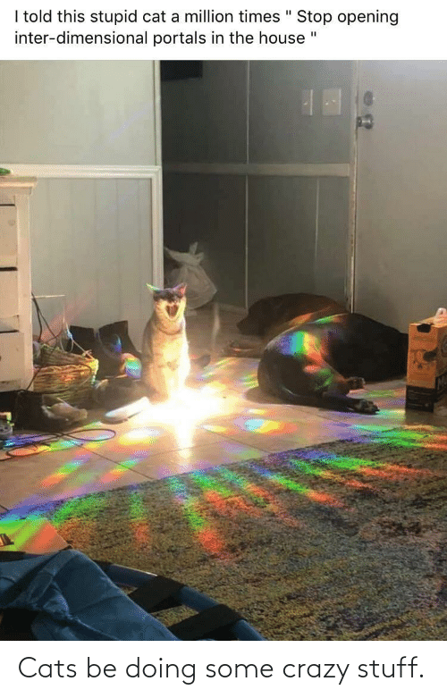 crazy: Cats be doing some crazy stuff.