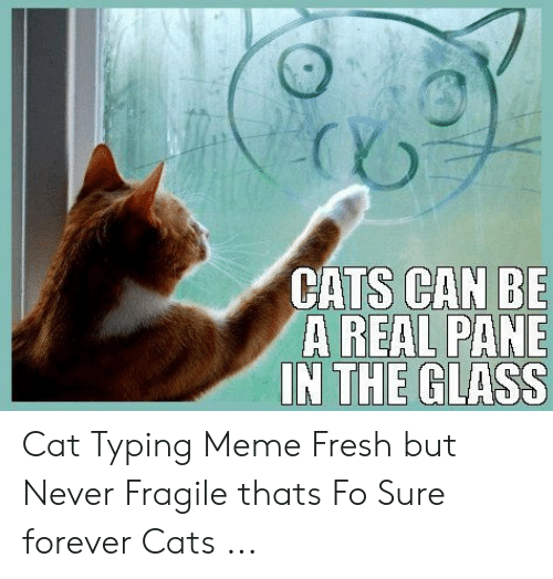 Cats, Fresh, and Meme: CATS CAN BE  A REAL PANE Cat Typing Meme Fresh but Never Fragile thats Fo Sure forever Cats ...