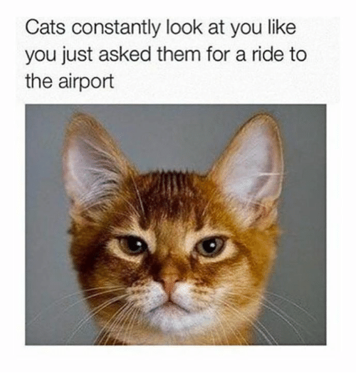 Cats, Dank, and 🤖: Cats constantly look at you like  you just asked them for a ride to  the airport