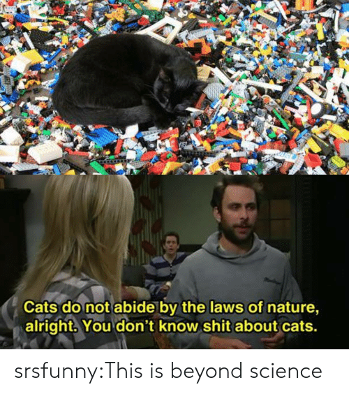 Science Class: Cats do not abide by the laws of nature,  alright. You don't know shit about cats. srsfunny:This is beyond science