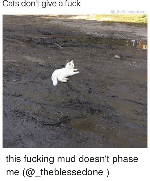 Cats, Fucking, and Memes: Cats  don't  give  a  fuck  @ theblessedone this fucking mud doesn't phase me (@_theblessedone )