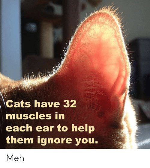 meh: Cats have 32  muscles in  each ear to help  them ignore you. Meh