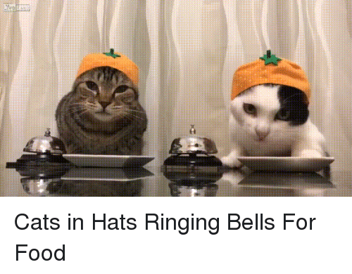 Cats In Hats Ringing Bells For Food