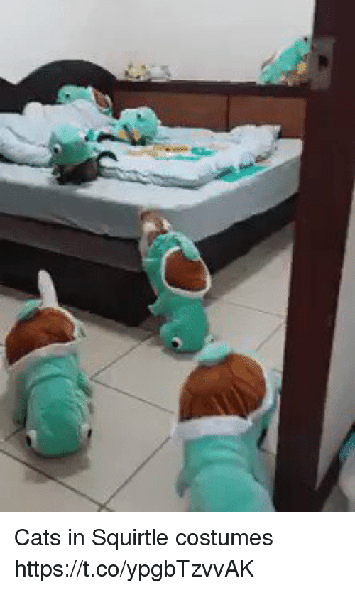 Cats, Hood, and Squirtle: Cats in Squirtle costumes  https://t.co/ypgbTzvvAK