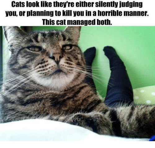 How Can You Tell If A Cat Likes You