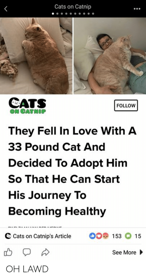 Cats On Catnip: Cats on Catnip  CATS  FOLLOW  ON CATNOP  They Fell In Love With A  33 Pound Cat And  Decided To Adopt Him  So That He Can Start  His Journey To  Becoming Healthy  C Cats on Catnip's Article  153 15  See More OH LAWD