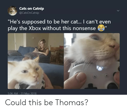 """Cats On Catnip: Cats on Catnip  @CatsOnCatnip  """"He's supposed to be her cat... I can't even  play the Xbox without this nonsense""""  5:06 AM 23 May 2018 Could this be Thomas?"""