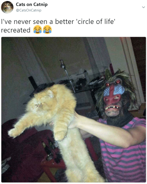 Cats On Catnip: Cats on Catnip  @CatsOnCatnip  I've never seen a better 'circle of life'  recreated