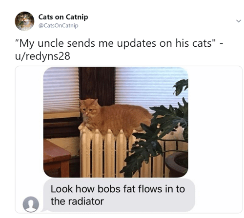 """Cats On Catnip: Cats on Catnip  @CatsOnCatnip  """"My uncle sends me updates on his cats""""  u/redyns28  Look how bobs fat flows in to  the radiator"""