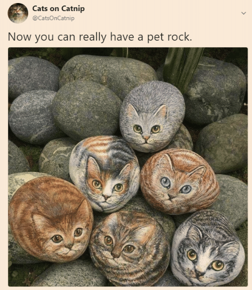 Cats On Catnip: Cats on Catnip  @CatsOnCatnip  Now you can really have a pet rock.