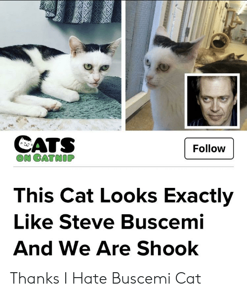 Cats On Catnip: CATS  ON CATNIP  Follow  This Cat Looks Exactly  Like Steve Buscemi  And We Are Shook Thanks I Hate Buscemi Cat