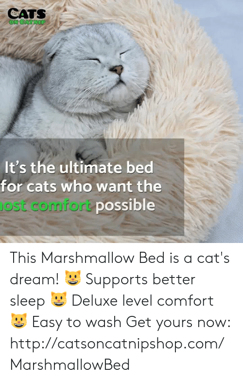 Cats On Catnip: CATS  ON CATNIP  It's the ultimate bed  for cats who want the  JOst comfort possible This Marshmallow Bed is a cat's dream!  😺 Supports better sleep 😺 Deluxe level comfort 😺 Easy to wash  Get yours now: http://catsoncatnipshop.com/MarshmallowBed