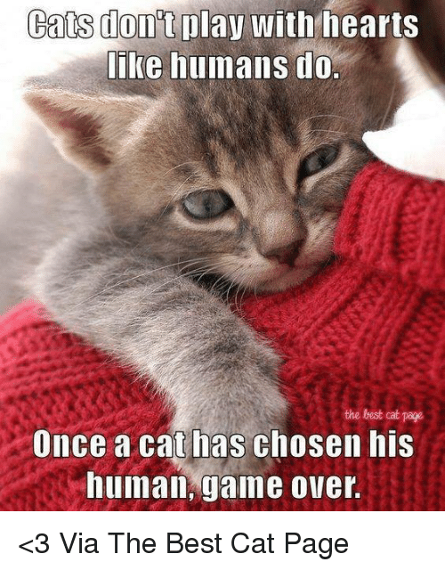 Best Cat: Cats play with hearts  like humans do.  the best cat page  Once a cat has chosen his  human, game over. <3 Via The Best Cat Page