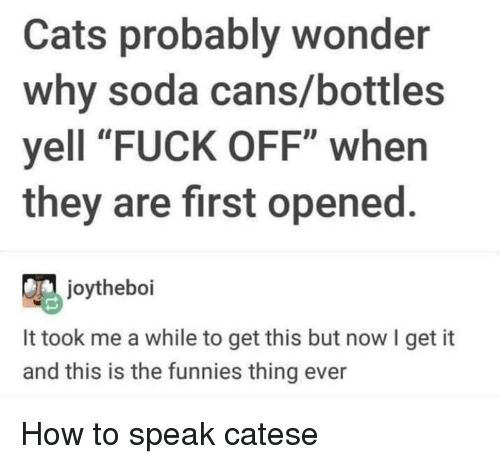"""funnies: Cats probably wonder  why soda cans/bottles  yell """"FUCK OFF"""" when  they are first opened.  joytheboi  It took me a while to get this but now I get it  and this is the funnies thing ever How to speak catese"""