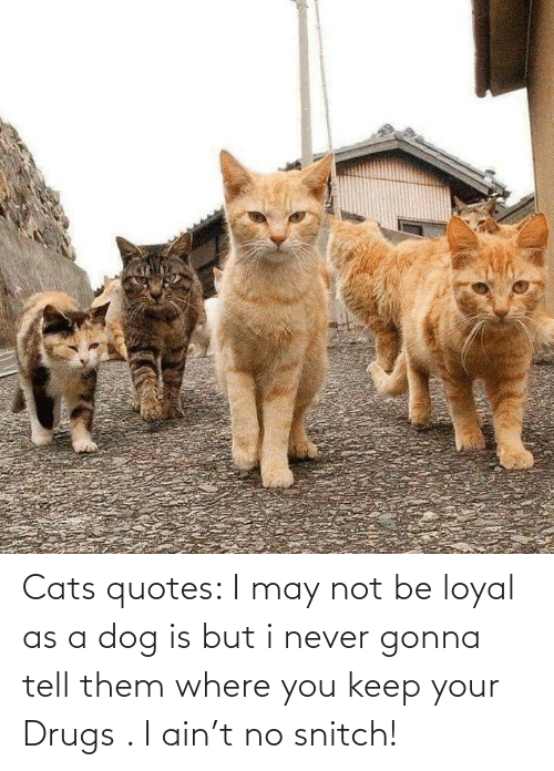 snitch: Cats quotes: I may not be loyal as a dog is but i never gonna tell them where you keep your Drugs . I ain't no snitch!