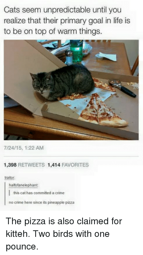 Crime, Memes, and Pizza: Cats seem unpredictable until  you  realize that their primary goal in life is  to be on top of warm things.  7/24/15, 1:22 AM  1,398  RETWEETS 1,414  FAVORITES  traitor.  halfofanelephant  this cat has committed a crime  no crime here since its pineapple pizza The pizza is also claimed for kitteh. Two birds with one pounce.