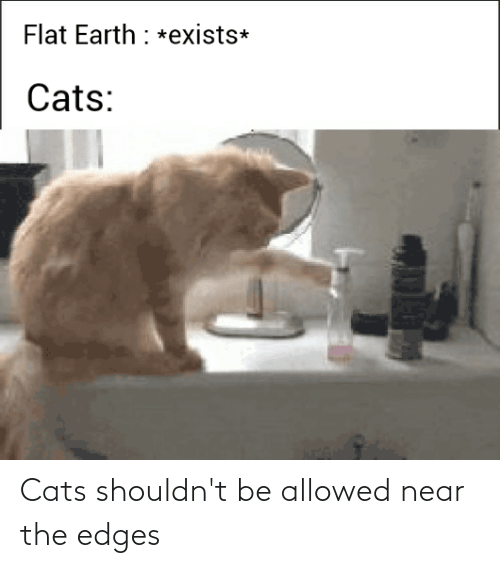 edges: Cats shouldn't be allowed near the edges