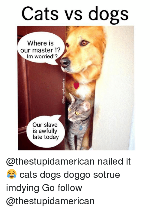 Cats, Dogs, and Memes: Cats vs dogs  Where is  our master  Im worried!?  Our slave  is awfully  late today @thestupidamerican nailed it 😂 cats dogs doggo sotrue imdying Go follow @thestupidamerican