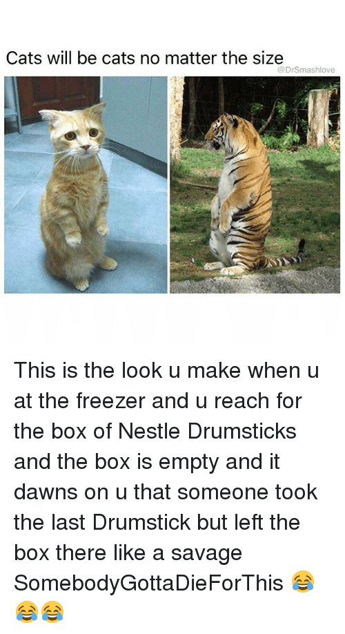 drumsticks: Cats will be cats no matter the size  @DrSmashlove This is the look u make when u at the freezer and u reach for the box of Nestle Drumsticks and the box is empty and it dawns on u that someone took the last Drumstick but left the box there like a savage SomebodyGottaDieForThis 😂😂😂