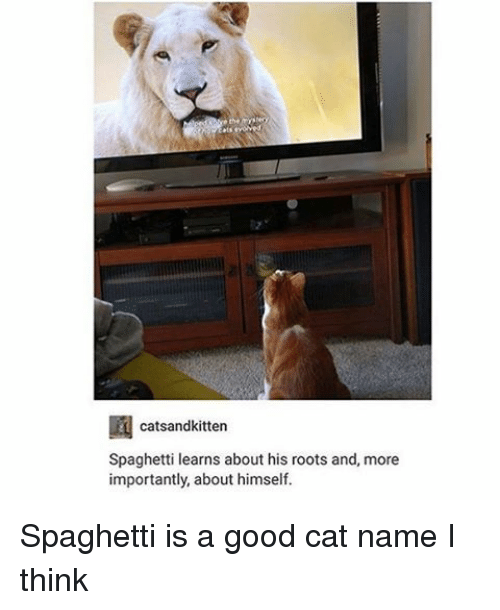 Good Cat: catsandkitten  Spaghetti learns about his roots and, more  importantly, about himself. Spaghetti is a good cat name I think
