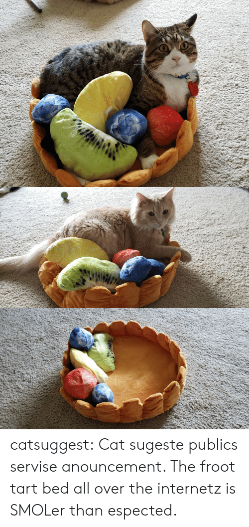 Internetz: catsuggest:  Cat sugeste publics servise anouncement. The froot tart bed all over the internetz is SMOLer than espected.