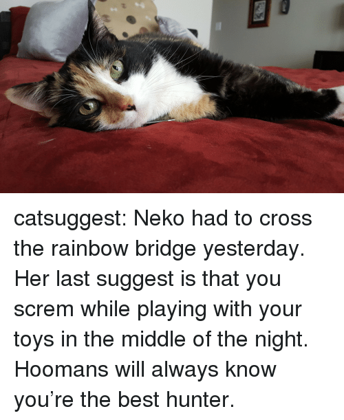 Hoomans: catsuggest:  Neko had to cross the rainbow bridge yesterday. Her last suggest is that you screm while playing with your toys in the middle of the night. Hoomans will always know you're the best hunter.