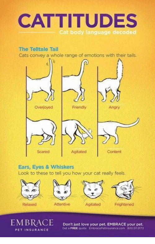 attentive: CATTITUDES  Cat body language decoded  The Telltale Tail  Cats convey a whole range of emotions with their tais  Overjoyec  Friendly  Angry  Scared  Agitated  Content  Ears, Eyes & Whiskers  Look to these to tell you how your cat really feels  Relaxed  Attentive  Agitated  Frightenesd  Don't just love your pet. EMBRACE your pet.  Get a FREE quote EmbracePetinsurance.com 800.511 9172  PET INSURANCE