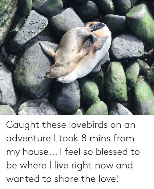 So Blessed: Caught these lovebirds on an adventure I took 8 mins from my house... I feel so blessed to be where I live right now and wanted to share the love!
