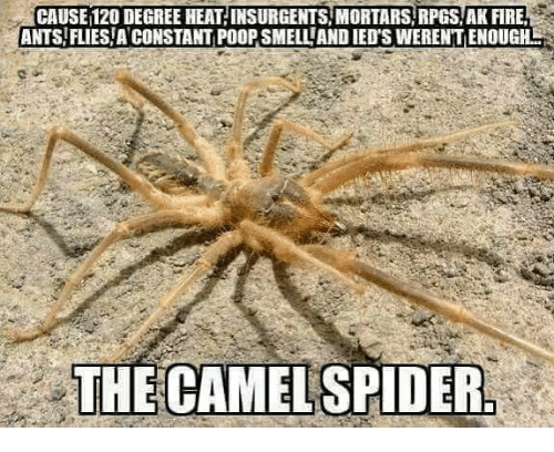 Poopes: CAUSE 120 DEGREE HEAT INSURGENTS MORTARS RPGS AK FIRE  ANTS FLIES A CONSTANT POOP SMELL AND IED'S WERENT ENOUGH  THE CAMELSPIDER