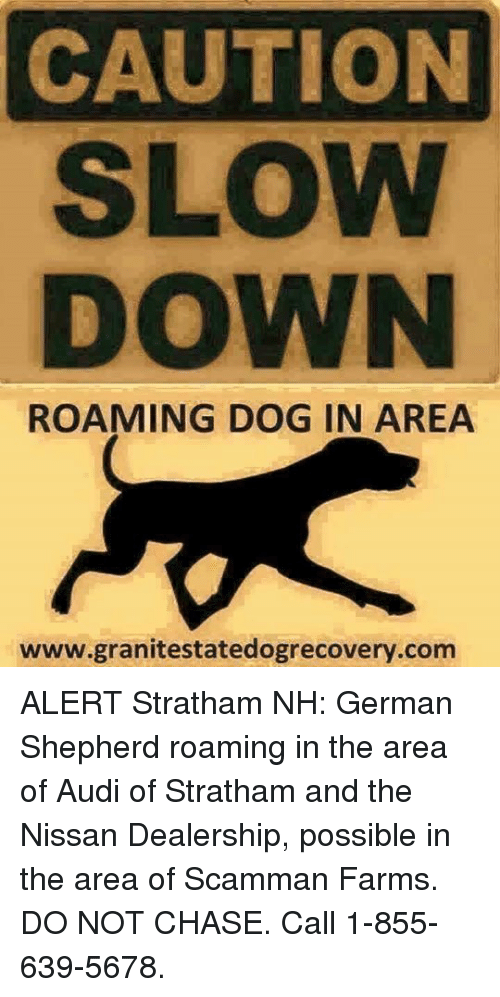 Caution Slow Down Roaming Dog In Area