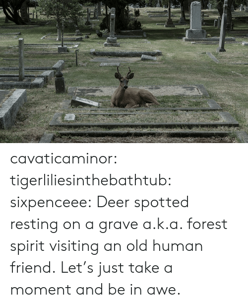 Resting: cavaticaminor: tigerliliesinthebathtub:  sixpenceee: Deer spotted resting on a grave a.k.a. forest spirit visiting an old human friend.   Let's just take a moment and be in awe.