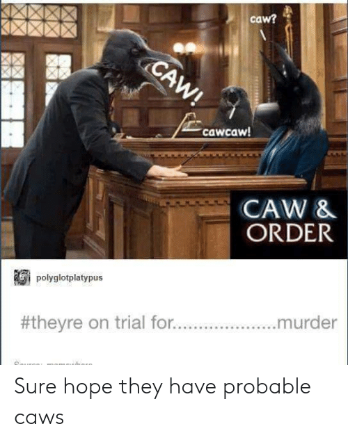 probable: caw?  cawcaw  CAW &  ORDER  plyglotplatypus  #theyre on trial for  murder Sure hope they have probable caws