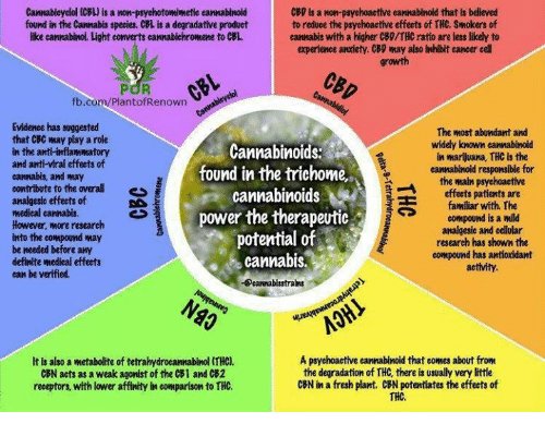 the psychoactive effects of marijuana due to the thc Drug interactions with marijuana december 09, 2014 john r horn cbd does not produce any of the psychoactive responses and appears to block some of the effects of thc by acting as an antagonist at the cannabinoid this difference in response may be due to the thc:cbd ratios in the 2.