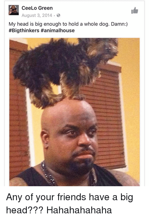 cee lo green: Cee Lo Green  August 3, 2014  My head is big enough to hold a whole dog. Damn:  #Bigthinkers Hanimalhouse Any of your friends have a big head??? Hahahahahaha