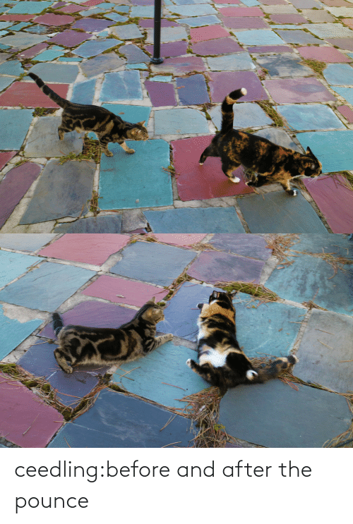 After The: ceedling:before and after the pounce